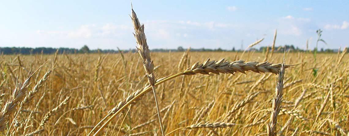 Sicurezza alimentare – per una Svizzera indipendente e sovrana
